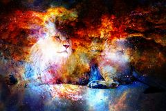 Lion in the cosmic space. Lion photos and graphic effect. Stock Photo