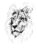 Lion - croquis un crayon Photos stock