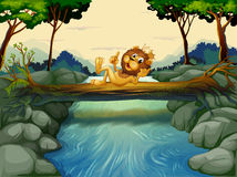 A lion with a crown at the river Royalty Free Stock Images