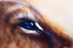 Lion cub blue eye. animal painting on vintage Royalty Free Stock Image