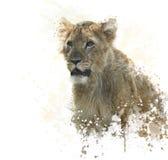 Lion Cub watercolor Stock Image