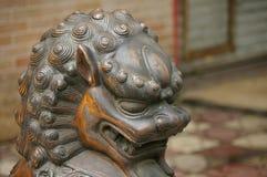 Lion cuivreux Images libres de droits