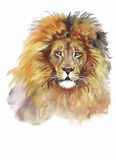 Lion d'aquarelle sur un vecteur blanc de fond Photos stock