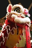 Lion Dance. The Lion Dance - a cultural heritage of the Chinese community royalty free stock photos