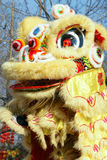 Lion dance Stock Images