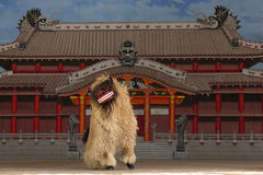 The Lion Dance Royalty Free Stock Images