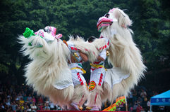 Lion Dance Stock Afbeelding