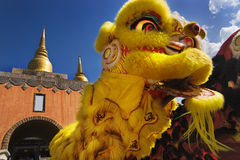 a lion dance stock photography