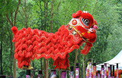 Lion dance by Malaysian Chinese Royalty Free Stock Photo
