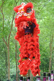 Lion dance by Malaysian Chinese Royalty Free Stock Image