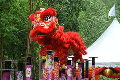 Lion dance by Malaysian Chinese Stock Image