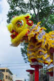 Lion dance on the Meihuaquan Stock Images