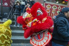 Lion Dance no bairro chinês Boston, Massachusetts, EUA imagem de stock