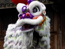 Lion dance performance Royalty Free Stock Images