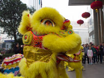 Lion dance, take part in the celebration of Chinese New Year Royalty Free Stock Images