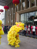 Lion dance, take part in the celebration of Chinese New Year Royalty Free Stock Photography