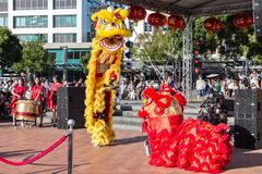 Lion dancers performing for Chinese New Year royalty free stock image