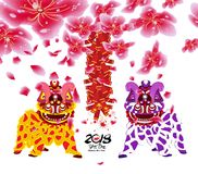 Lion dancing and chinese new year with blossom and firecracker Royalty Free Stock Photography