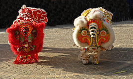 Lion Dancing Chinese New Year Celebrations in Blackburn England Stock Images