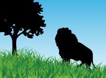 Lion dans l'herbe Photo stock