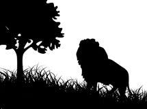 Lion dans l'herbe Photographie stock libre de droits