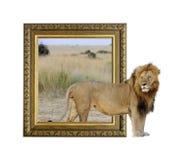 Lion dans le cadre avec l'effet 3d Images libres de droits