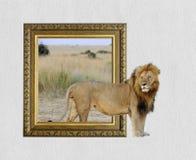 Lion dans le cadre avec l'effet 3d Photos libres de droits