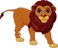 Lion de marche Photo stock
