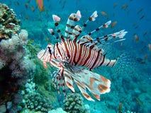 lion de poissons Photographie stock