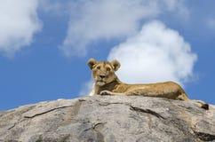 Lion de roche Photos stock