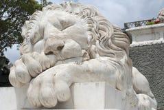 Lion de sommeil Photographie stock libre de droits