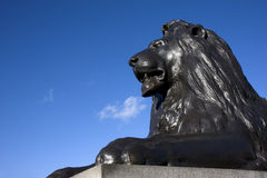 Lion de Trafalgar Photos libres de droits