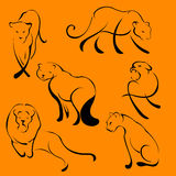 Lion Design Set Royalty Free Stock Photo
