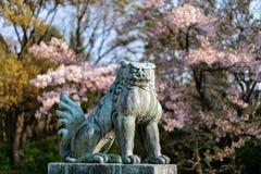 Lion Dog Statue japonais chez Cherry Blossoms photos libres de droits
