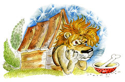 Lion in doghouse. Displeased lion in kennel guard the house Stock Images