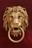 Lion door knob Stock Images