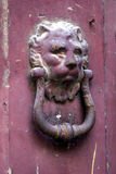 Lion door knocker. On a red wooden door with iron ring and peeling paint, in agrigent, Italy stock image