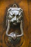 Lion Door Knocker i Cortona, Italien Royaltyfria Foton