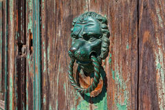Lion doorknob on old wooden door. Bronze metal doorknob in the shape of lion head on old wooden door Royalty Free Stock Photo