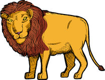 Lion Drawing Royalty Free Stock Images