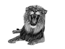 Lion drawing from pencil royalty free stock photos