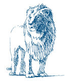 Lion drawing Stock Photo