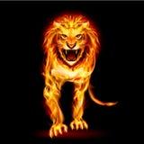 Lion du feu Image stock