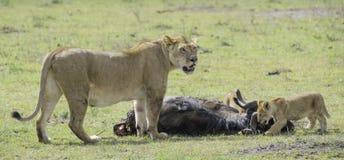 Lion et petits animaux Photo stock