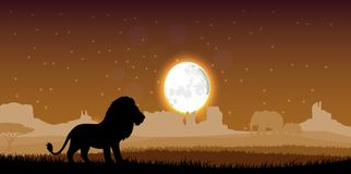 Lion in the evening. Illustration of Lion in the evening Royalty Free Stock Photos