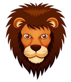 Lion face. Illustration of Lion face on white background Stock Photos