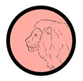 Lion Face Closeup Vector. Design Royalty Free Stock Image
