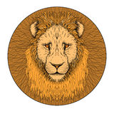Lion face color  realistic Royalty Free Stock Images