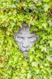 Lion face concrete hidden in green ivy wall in garden. Royalty Free Stock Photos