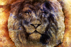 Lion face drawing  on vintage paper collage. Abstract background. eye contact Stock Photo
